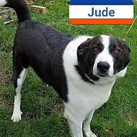 Adopt A Pet :: Jude - Fayette City, PA