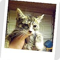 Adopt A Pet :: Sassy - Owosso, MI