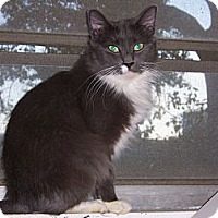 Adopt A Pet :: Smokey - Atlanta, GA