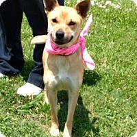 Adopt A Pet :: AMELIA - Bedminster, NJ