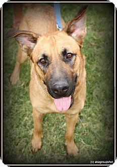German Shepherd Dog Mix Dog for adoption in Phoenix, Arizona - Brandy