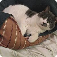 Adopt A Pet :: Halo - Plattekill, NY
