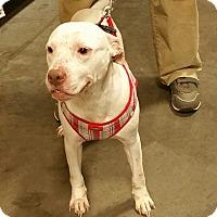 Adopt A Pet :: Crystal - Alexis, NC