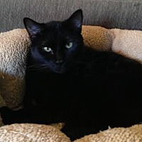 Adopt A Pet :: Charlotte - Houston, TX
