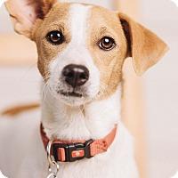 Adopt A Pet :: Marty - Portland, OR