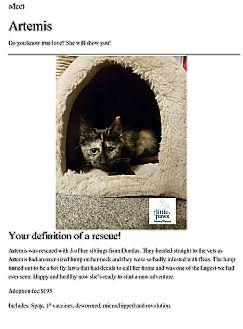 Domestic Shorthair Kitten for adoption in Hamilton, Ontario - Artemis