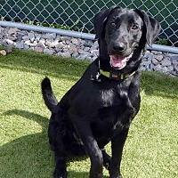 Adopt A Pet :: Duke #2 - Purcellville, VA