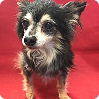 Adopt A Pet :: Duffy - Garland, TX