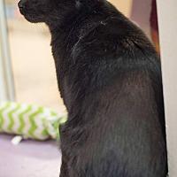 Adopt A Pet :: Louie - Mt. Prospect, IL