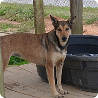Adopt A Pet :: Sable - Grenada, MS