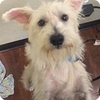 Adopt A Pet :: Landon - Oak Ridge, NJ