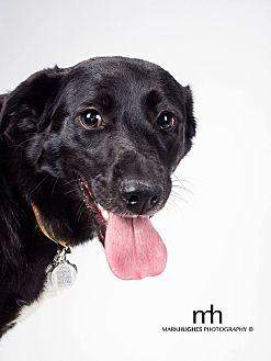 Border Collie/Shepherd (Unknown Type) Mix Dog for adoption in Edmonton, Alberta - Jersey