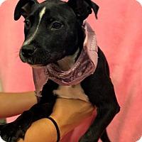 Adopt A Pet :: BEIJING - Bryan, TX