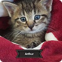 Adopt A Pet :: ARTHUR - Millerstown, PA