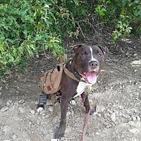Adopt A Pet :: ROCKET! - Grafton, OH