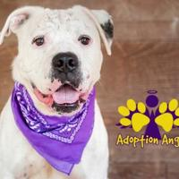 Mixed Breed (Large) Mix Dog for adoption in Georgetown, Texas - Pongo