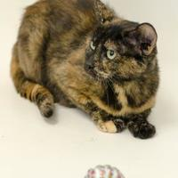 Adopt A Pet :: Shelby - Dayton, OH