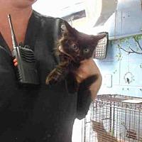 Adopt A Pet :: A504663 - San Bernardino, CA