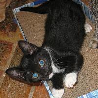 Adopt A Pet :: Georgy Girl - Mobile, AL