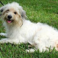 Adopt A Pet :: Bonnie Raitt - Jersey City, NJ