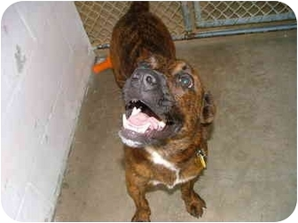 Hound (Unknown Type) Mix Dog for adoption in Winter Haven, Florida - Corky