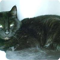 Adopt A Pet :: Wendy - Maywood, NJ