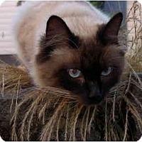 Adopt A Pet :: Sidney - Keizer, OR