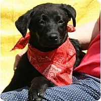 Adopt A Pet :: CODY - Wakefield, RI
