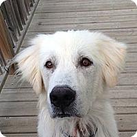 Adopt A Pet :: Gunnar - Minneapolis, MN