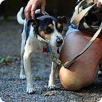 Adopt A Pet :: Pops - Tinton Falls, NJ