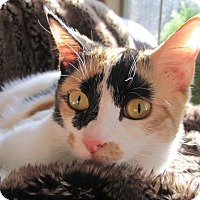 Adopt A Pet :: Tulip - Edmond, OK