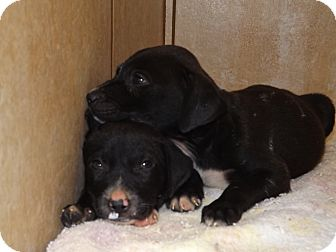 Hound (Unknown Type) Mix Puppy for adoption in Thomaston, Georgia - Just~Us