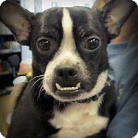 Adopt A Pet :: Henry - Chesterfield, VA