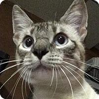 Adopt A Pet :: Bojangles - Winchester, CA