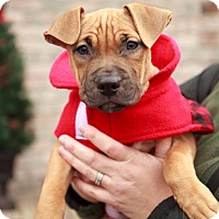 Adopt A Pet :: Thelma - Reisterstown, MD