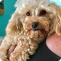 Adopt A Pet :: Ling Ling - San Francisco, CA