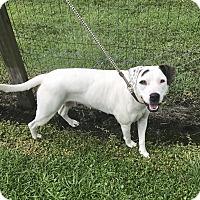 Adopt A Pet :: Trina - Newport, NC