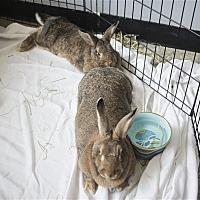 Adopt A Pet :: Hazel - Victoria, BC