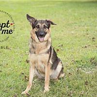Adopt A Pet :: Trouble - Montgomery, AL