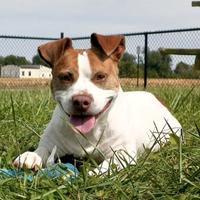 Adopt A Pet :: Baby HW (-) - Owensboro, KY