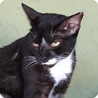 Adopt A Pet :: Chip - Palm City, FL
