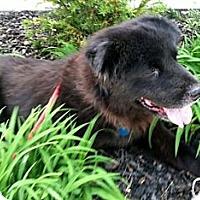 Adopt A Pet :: Otto - Tucker, GA