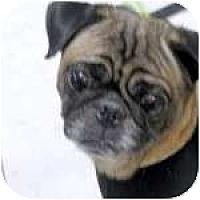 Adopt A Pet :: Shadow - Windermere, FL