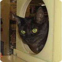 Adopt A Pet :: Frosty - Jenkintown, PA