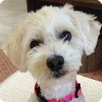 Adopt A Pet :: Annie - La Costa, CA