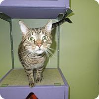 Adopt A Pet :: Leopold - Medina, OH