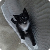 Adopt A Pet :: Chelsea - Raritan, NJ