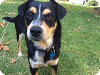 Terrier (Unknown Type, Small) Mix Dog for adoption in Gig Harbor, Washington - Daisy