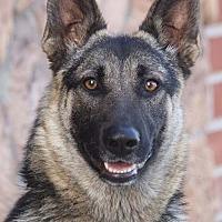 Adopt A Pet :: Leia von Leidefelde - Los Angeles, CA