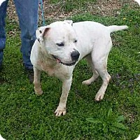 Adopt A Pet :: Titus - Warrensburg, MO